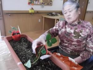 【福祉館恵海:うみかぜ:はまゆう】いちごを植えました!!②
