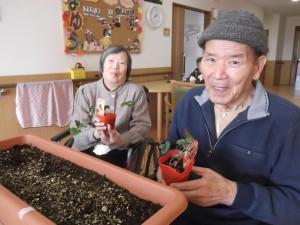 【福祉館恵海:うみかぜ:はまゆう】いちごを植えました!!